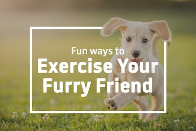 5 Ways to exercise your furry friend