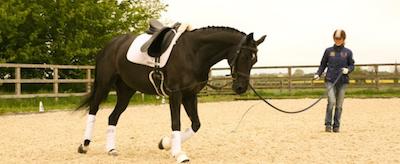 horse-lunge-dressage-png