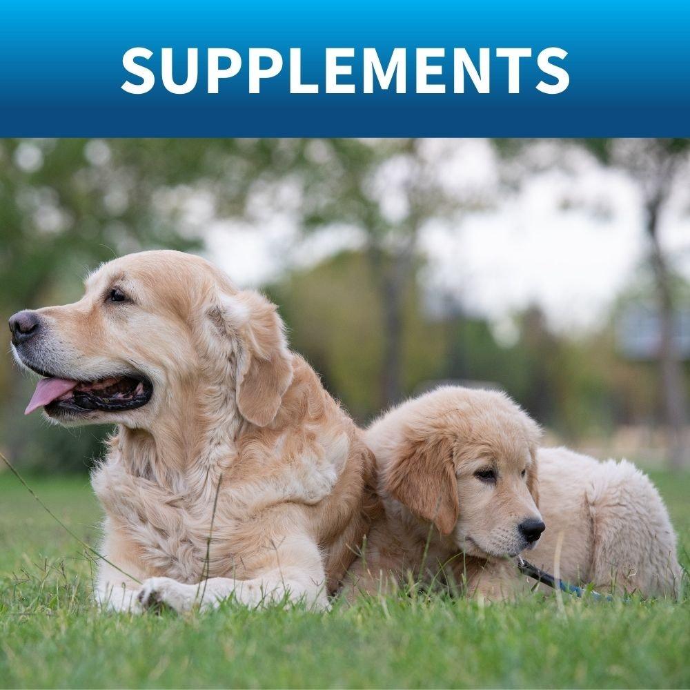 shop dog vitamins and supplements