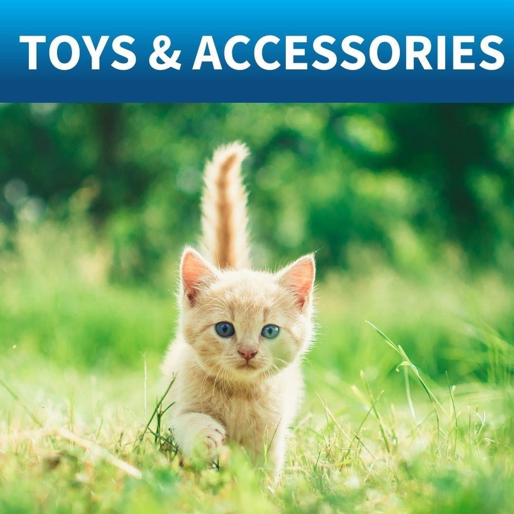 shop toys and scratchers for kittens