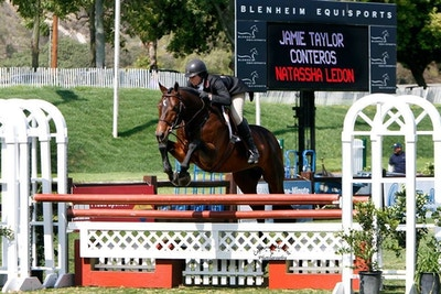 Conteros: Versatile Stallion Taking North America By Storm