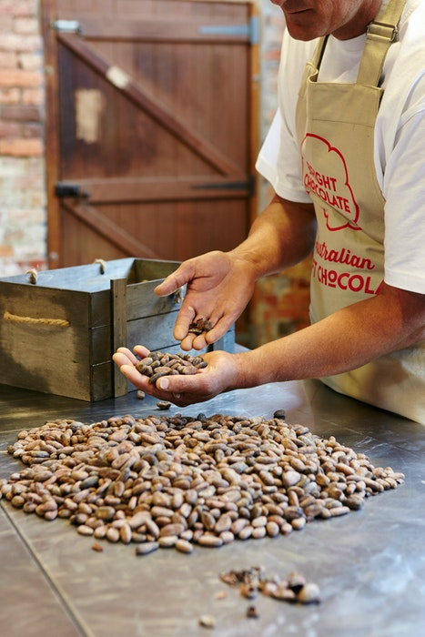 Sorting the cacao beans  only the perfect beans make it in