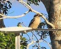 A kookaburra makes the Winguard aerial home
