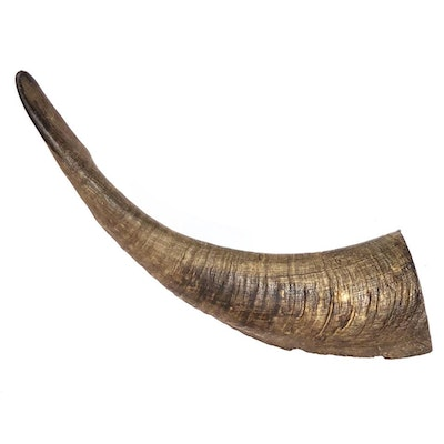 Bugsy's Pet Supplies LONG LASTING | Whole Goat's Horn Dental Chews for Large Dogs