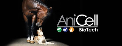 AniCell Success Story: Severe Melting Ulcer