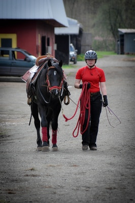 Meredith Manor: Horse Logic