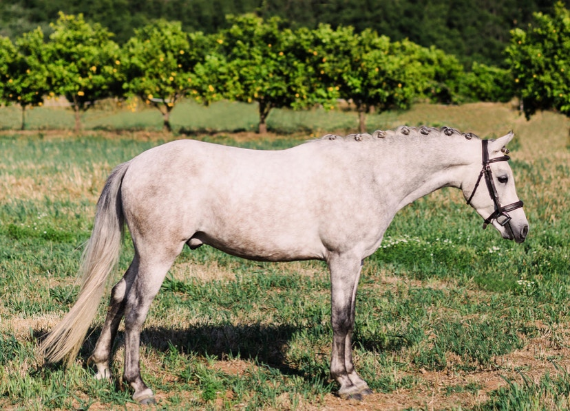 5 Reasons Quality Photos Help Your Horse Sell Faster
