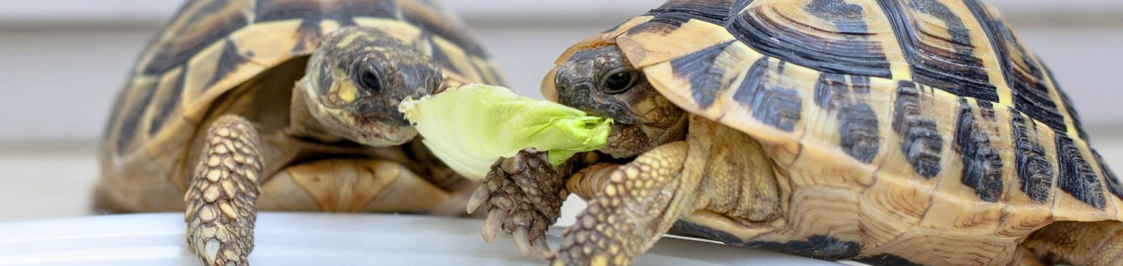 A Quick Guide to Caring for Your Turtle