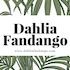 Dahlia Fandango
