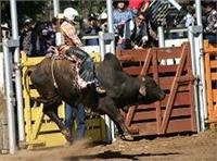 High octane bull power, Mareeba Rodeo.