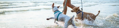 How Much Exercise Does a Dog Need to be Healthy and Happy?