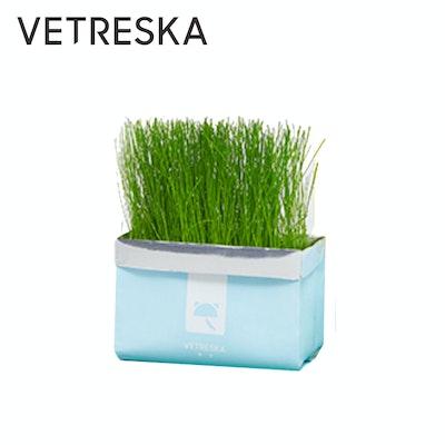 VETRESKA Soilless Cat Grass - Ryegrass