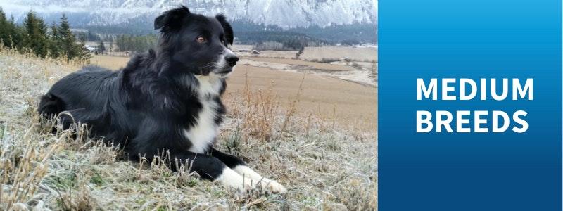 Watch Medium Dog Breed Videos