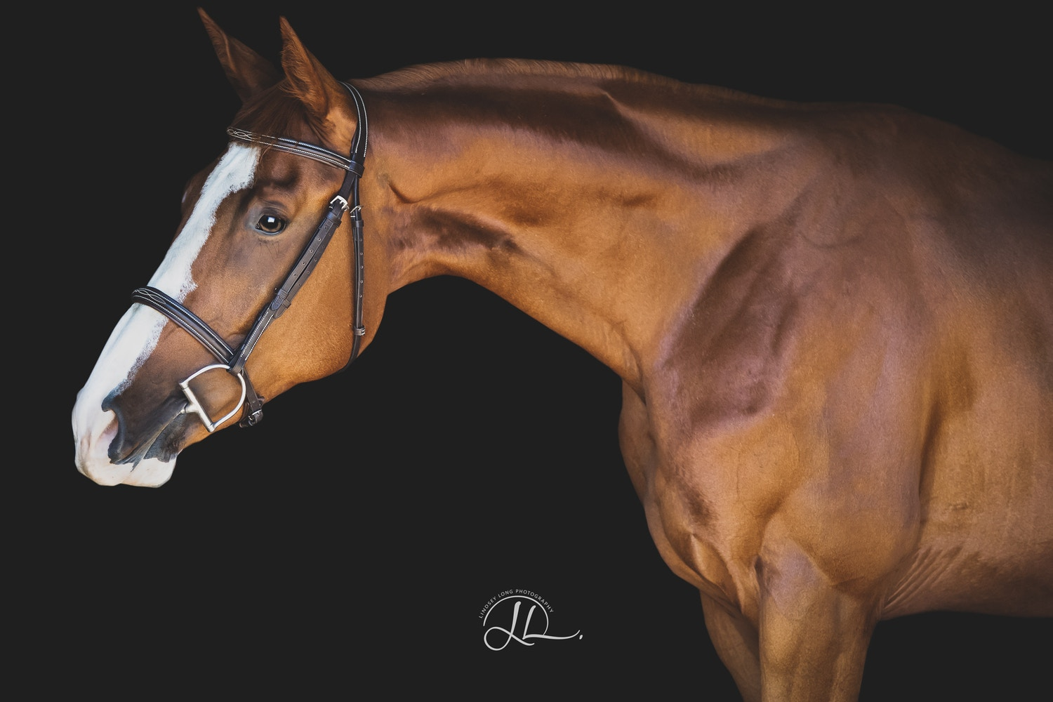 5 Must Have Photos of Your Horse -- and How to Get Them