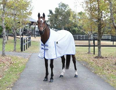 KINGSLEY Ripstop Horse Rug