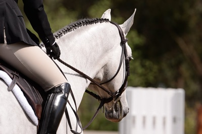 Preventing Injuries: See Your Horse Through a Vet's Eyes