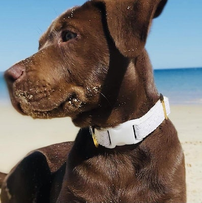 Cedarwood and Ash Handmade Wedding/Special Occasion Dog Collar with White Buckle