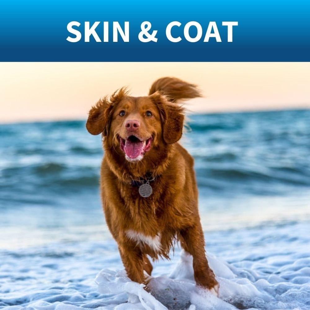 shop dog coat shampoo
