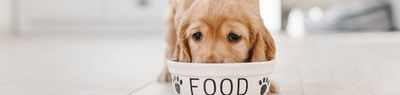 Nutrient Requirements for Growing Puppies