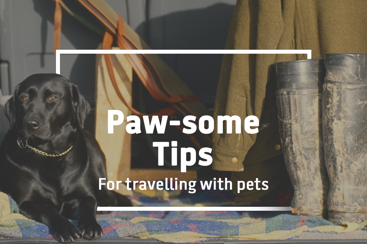 Paw-some tips for travelling with pets