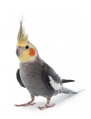 bird-forward-transp-png