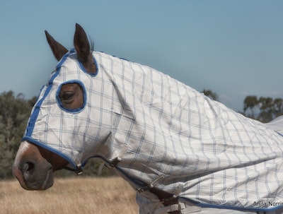Capriole Equestrian Deluxe Royal Blue Summer Hood