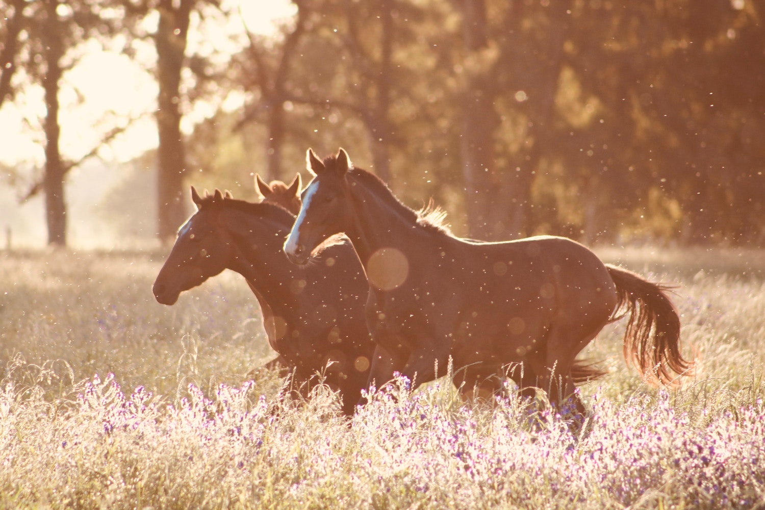 Sustenance Herbs: A Natural Treatment for Equine Parasites