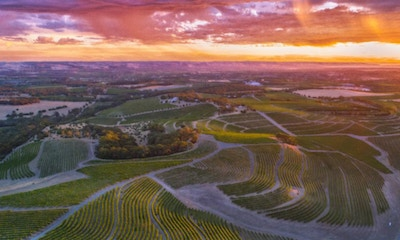 A Guide to McLaren Vale