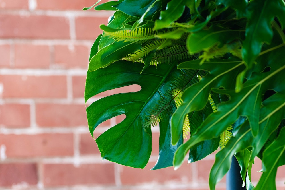 Modern Party Tropical Greenery Party Adelaide