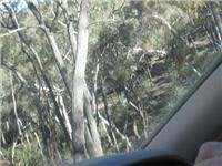 25 deg slope. Check angle against trees. Molonglo, ACT.