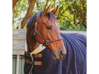 Iconic Equestrian Iconic Grandeur Fleece Rug - Navy