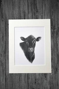 Angus Steer Print