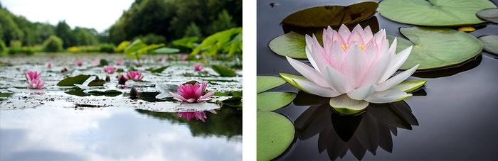 lotus-flower-season1-jpg
