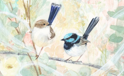 Flightpath of a Fairy Wren Fine Art Print