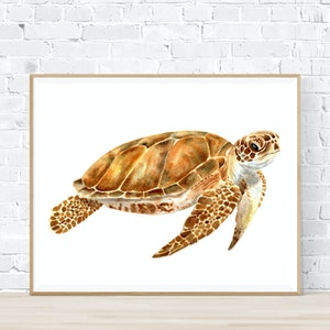 Leo the Sea Turtle - Archival Print A4
