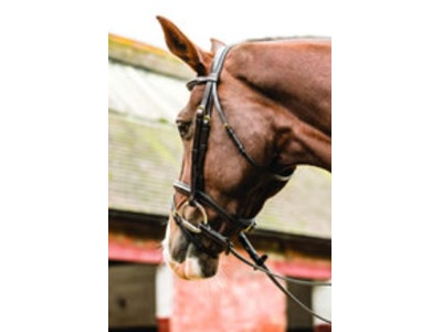 Mark Todd Performance Flash Bridle with Brass Buckles