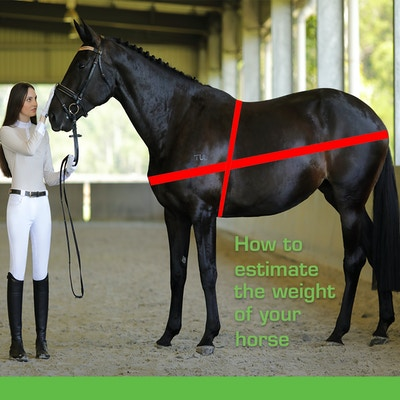 How to estimate the weight of your horse
