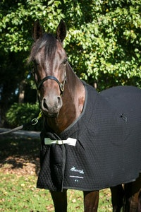 Diamond Deluxe Horsewear Deluxe Quilted Wool Rug