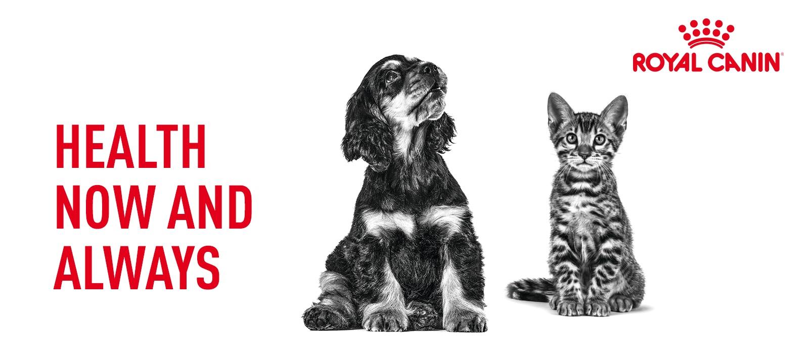 shop royal canin pet food on bondi pet