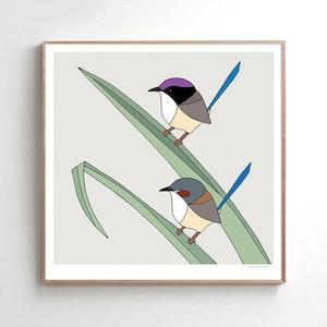 Purple-crowned Fairy-wrens & Pandanus