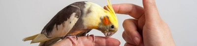 Caring for Your First Bird: A Quick Guide