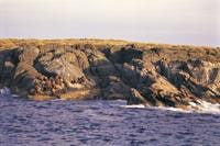 Seal colony sitting on rocky outcrop of Montague Island Nature Reserve