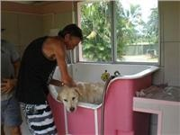 More pressure  on the shoulders please. Kurrimine Beach Qld.  pet  hydro bath