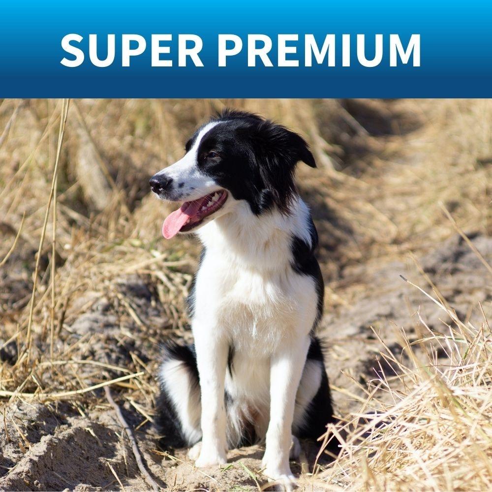 shop best premium dog food