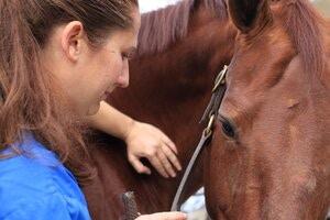 Equine Chiropractic - FAQs