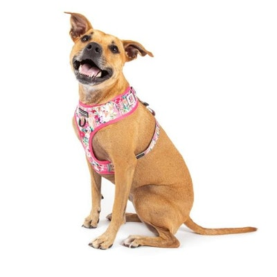 Big & Little Dogs Born To Be A Unicorn Adjustable Harness