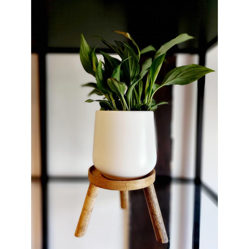 Pretty Cactus Plants  Small Wooden Plant Stool - 12cm Diameter X 15cm Tall