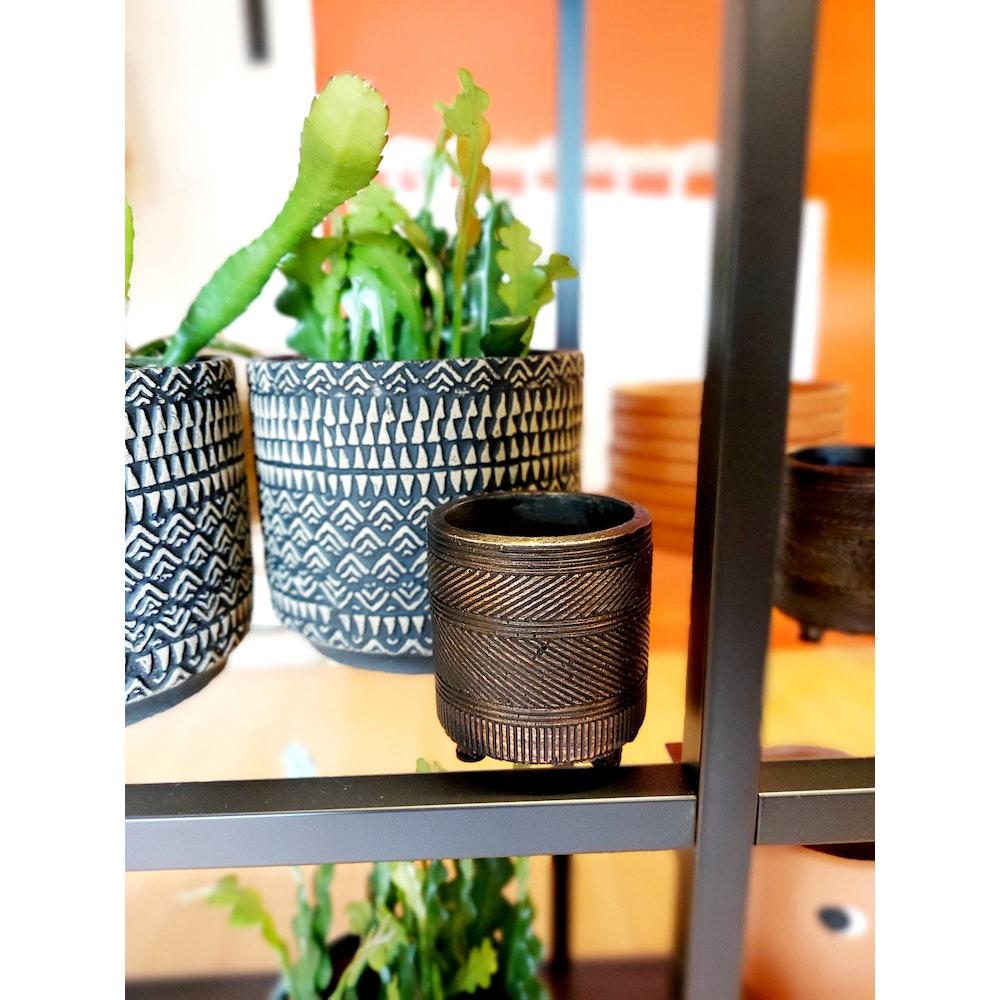 Pretty Cactus Plants  Pot Nola Shiny Brown - D7 H8cm