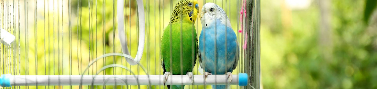 Choosing the Right Home for Your Bird