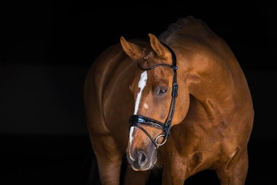 PS OF Sweden All In Revolution Bridle